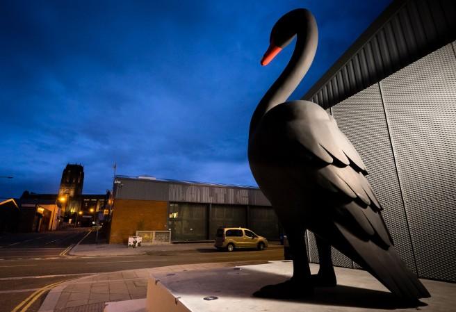 'Baltic' Black Swan